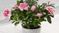 Saksı Çiçeklerle Evinizin Havasını Değiştirin