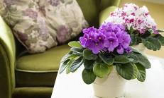 Evinizi Çiçeklerle Renklendirin