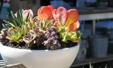 Evde Çiçek Bakımı Nasıl Yapılır?