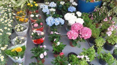 Evlerinizde Yetiştirebileceğiniz Çiçek Çeşitleri